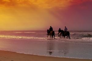 Guided Horseback Rides - Rythmia